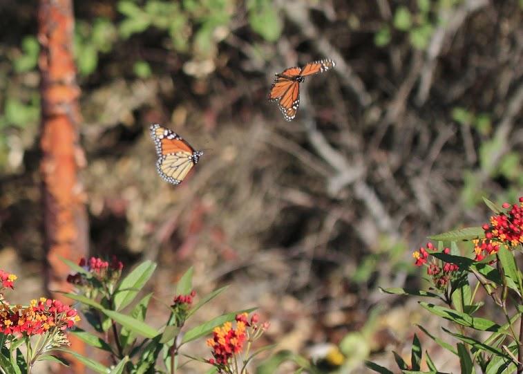 2015 Doyle Community Park Butterfly Garden University